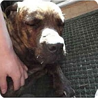 Adopt A Pet :: Lola - Washington, NC