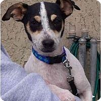Adopt A Pet :: CURLY - Phoenix, AZ