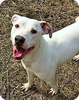Terrier (Unknown Type, Medium) Mix Dog for adoption in Flint, Michigan - Diamond