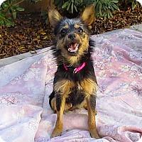 Adopt A Pet :: Dolly**Video - Pasadena, CA