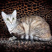Adopt A Pet :: Hasna - McEwen, TN