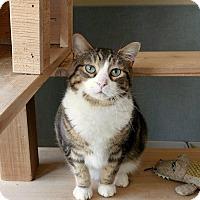 Adopt A Pet :: Bud - Kingston, WA
