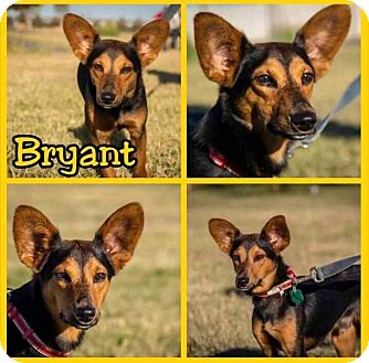 Terrier (Unknown Type, Small) Mix Dog for adoption in Oxford, Connecticut - Bryant
