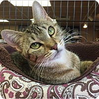 Adopt A Pet :: Nefertiti - River Edge, NJ