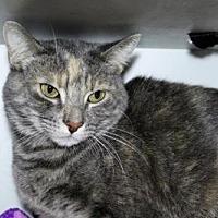 Adopt A Pet :: *MAGGIE - Burbank, CA