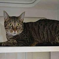 Adopt A Pet :: LUNA - Miami, FL