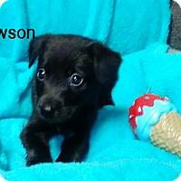 Adopt A Pet :: Dawson - Harrisburg, PA
