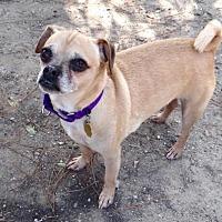 Adopt A Pet :: Arnold - Seal Beach, CA