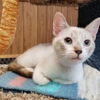 Adopt A Pet :: Kitten 16248 - Parlier, CA