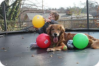 Golden Retriever Dog for adoption in White River Junction, Vermont - Riley
