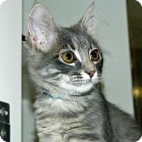 Adopt A Pet :: Apocalypse - Cheyenne, WY