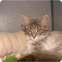 Adopt A Pet :: Prince - Arlington, VA