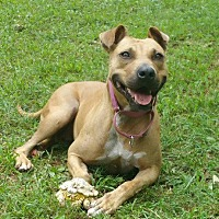 Adopt A Pet :: Holly - Crossville, TN