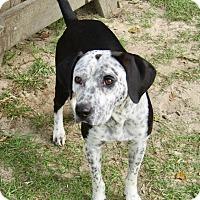 Adopt A Pet :: Freckles - Barnegat, NJ