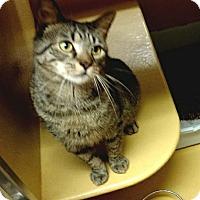 Adopt A Pet :: Zippy - Colmar, PA