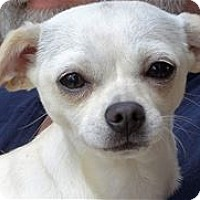 Adopt A Pet :: DAKOTA - Pleasanton, CA