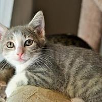 Adopt A Pet :: Bambi - Lake Worth, FL
