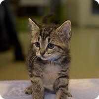 Adopt A Pet :: Ethel - Medina, OH
