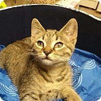 Adopt A Pet :: Charlie - Newtown Square, PA