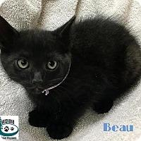 Adopt A Pet :: Beau - Handsome Boy! - Huntsville, ON