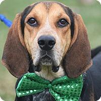 Adopt A Pet :: Davey - Huntley, IL