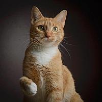 Adopt A Pet :: Helen - St.Ann, MO