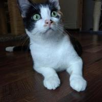 Adopt A Pet :: Miss Boov - Fort Collins, CO