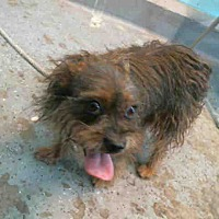 Adopt A Pet :: Willow - Encino, CA