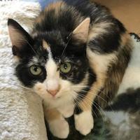Adopt A Pet :: Ione - Washington, IA