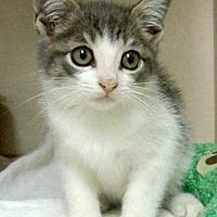 Adopt A Pet :: Zena - Germansville, PA