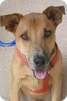 Hound (Unknown Type) Mix Dog for adoption in Wickenburg, Arizona - Oliver