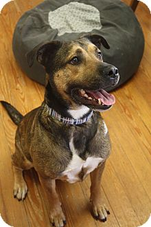 German Shepherd Dog/Shepherd (Unknown Type) Mix Dog for adoption in Marietta, Georgia - Riley