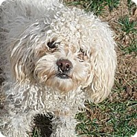 Adopt A Pet :: Sonny #5223 - Jerome, ID