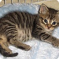 Adopt A Pet :: Luna - Richmond, VA