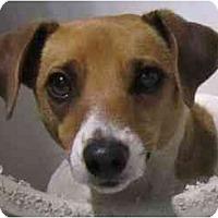 Adopt A Pet :: Poppy - Omaha, NE