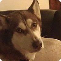 Adopt A Pet :: Kallie - Wadsworth, OH
