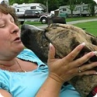 Adopt A Pet :: Kara - Cornwall, ON