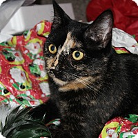 Adopt A Pet :: Dolly - Millersville, MD