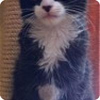 Adopt A Pet :: Papillion - St. Louis, MO