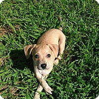 Adopt A Pet :: Mocha - Waller, TX