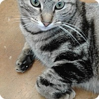 Adopt A Pet :: Nelly Belle - Lake Charles, LA