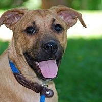 Adopt A Pet :: BUSTER - Coeburn, VA