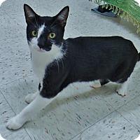 Adopt A Pet :: Hachi - Chambersburg, PA