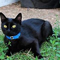 Adopt A Pet :: Rylee Cheyenne Summers - Denver, CO