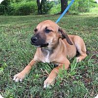 Adopt A Pet :: Jill - Allentown, PA