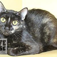 Adopt A Pet :: Veronica - Dalzell, IL