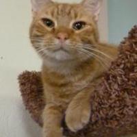 Adopt A Pet :: Buster Brown - Westville, IN