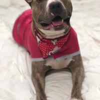 Adopt A Pet :: Mary Jane - Valparaiso, IN