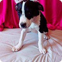 Adopt A Pet :: Oreo - San Ysidro, CA
