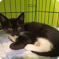 Adopt A Pet :: Cosmo - Coos Bay, OR